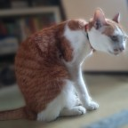 猫背のねこ