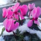 14_15初積雪